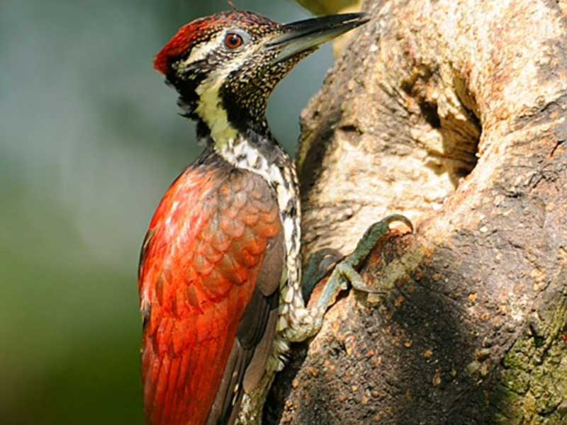 Ultimate Bird Watching Tour of Sri Lanka